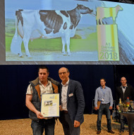 All german Holstein 2015